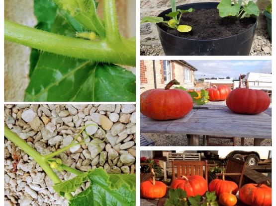 Power Logistics pumpkin competition